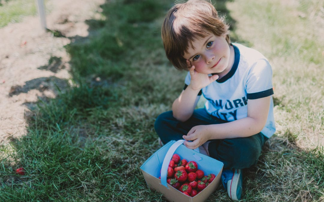 Mini family session, Strawberry picking